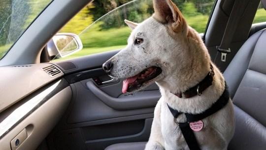 Peut-on emmener un animal en taxi?