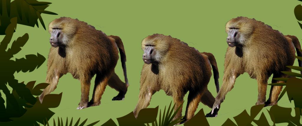 Ko streso valdyme galime pasimokyti iš beždžionių ir kodėl tai svarbu?