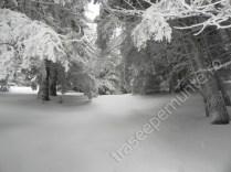 muntii-ciucas_brazi-iarna