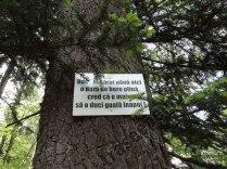 Mesaje ecologice_2