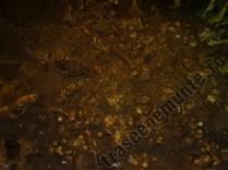 Pestera Ursilor_fosile de urs de caverna_2