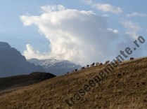 Culmea Zamora_turma de vaci