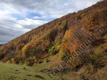 Valea Luncii