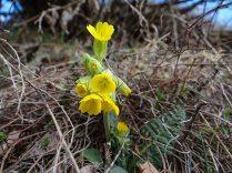 Florea Ciubotica Cucului