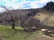 Staul de oi in satul Pestera