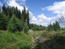 Druma langa Saua Fundu Colbului-Muntii Giumalau