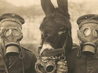 """Caporali, Folco Qulici con """"Animali nella grande guerra"""""""