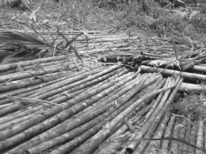 Escondido, así permanece El Salado de Consotá. Como avergonzándose de ser ese lugar que marca buena parte de la historia precolombina de la región.