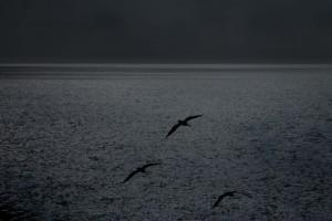 2-Agua y aves