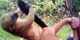 Perro de monte maltratado. Foto: eltiempo.com