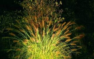 Beispiele von Gartenbeleuchtungen im Schaugarten