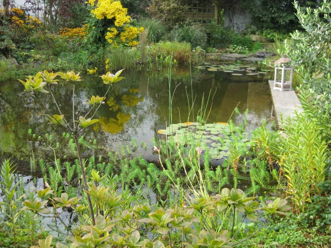 Gartenteich galabau m hler naturteich for Naturteich pflanzen