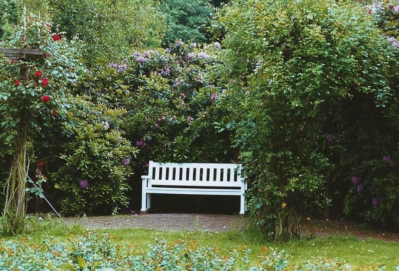 Der Garten im Schatten