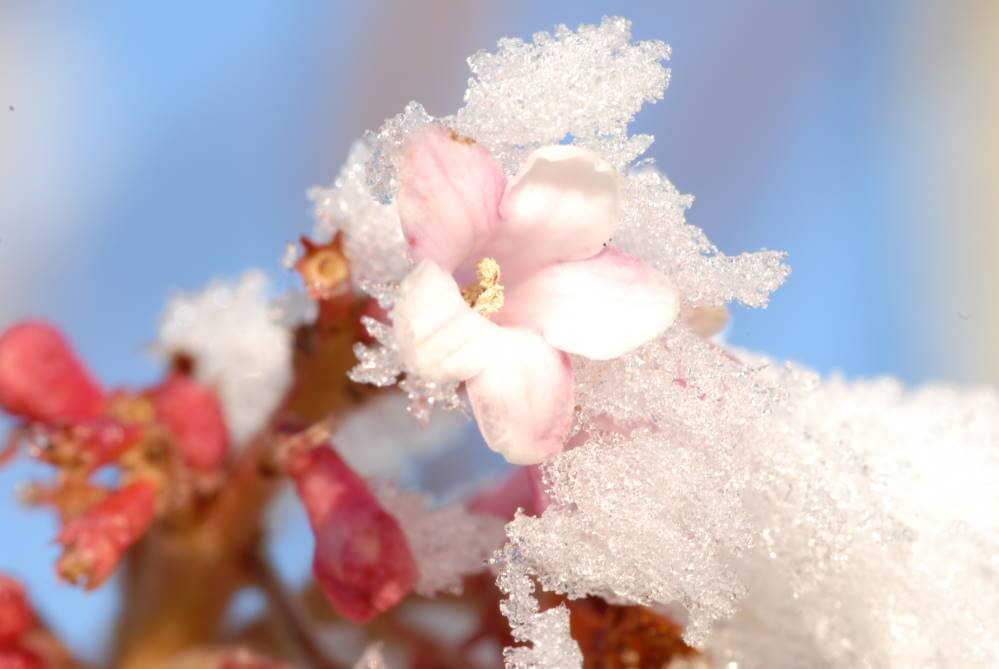 Winterdienst in Kleve