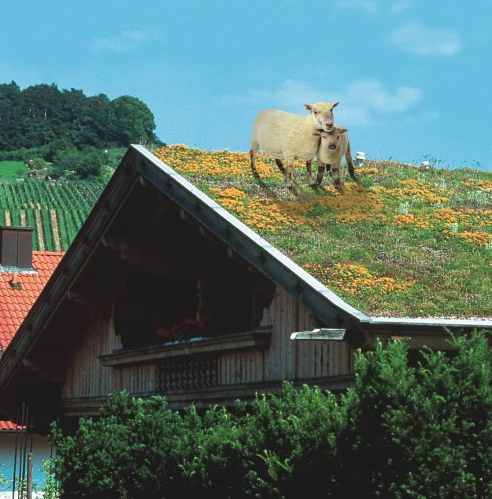 grünes Dach
