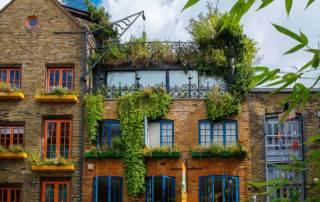 grüne Hauswand