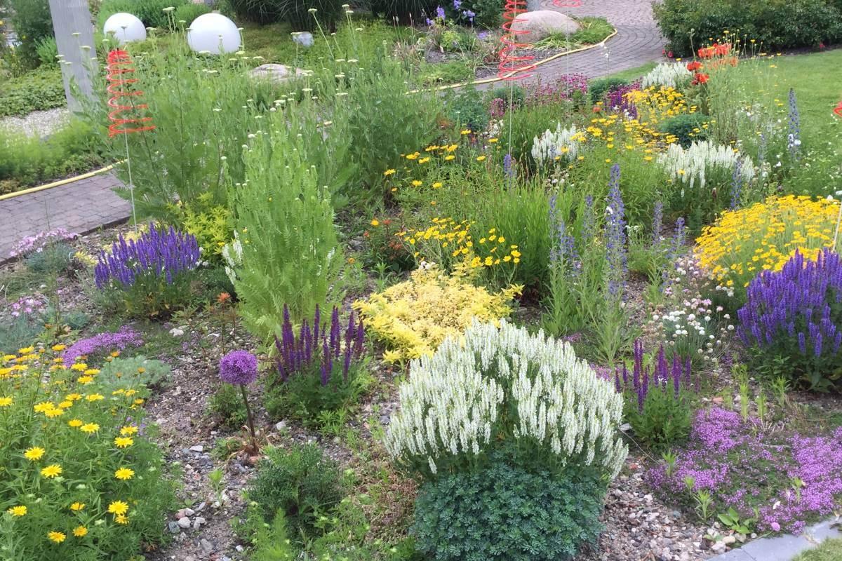 Blumenwiese am Niederrhein