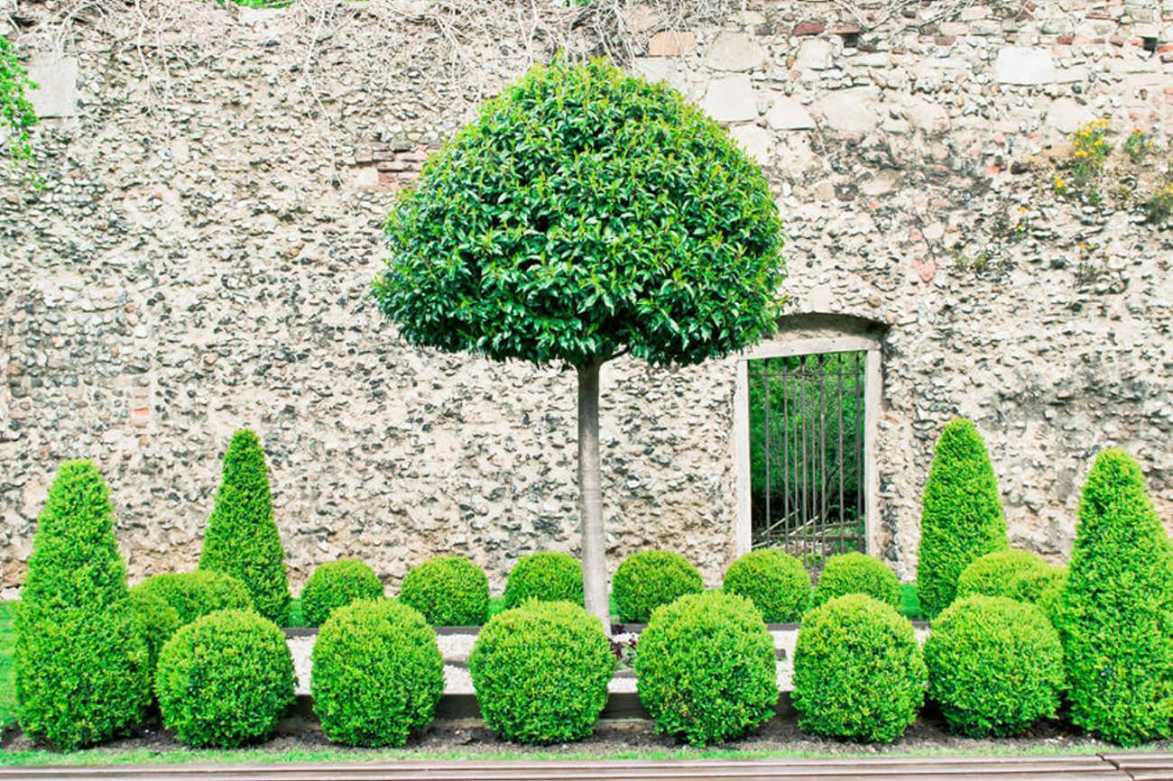 spalier und form taumgarten galabau m hler kleve. Black Bedroom Furniture Sets. Home Design Ideas