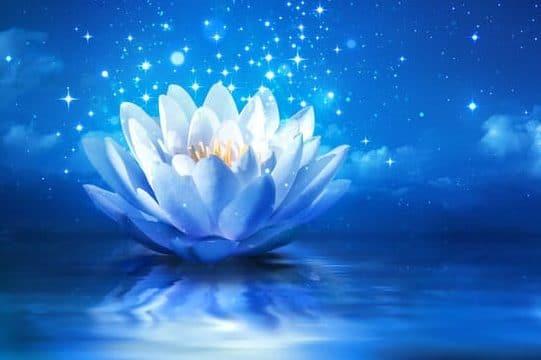 Opening Flowers: Meditative Ambient Musik