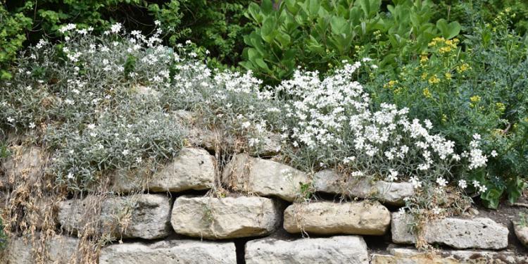 un muret en pierre de jardin