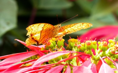 Beautiful butterfly on a flower in the hills near Kengtung