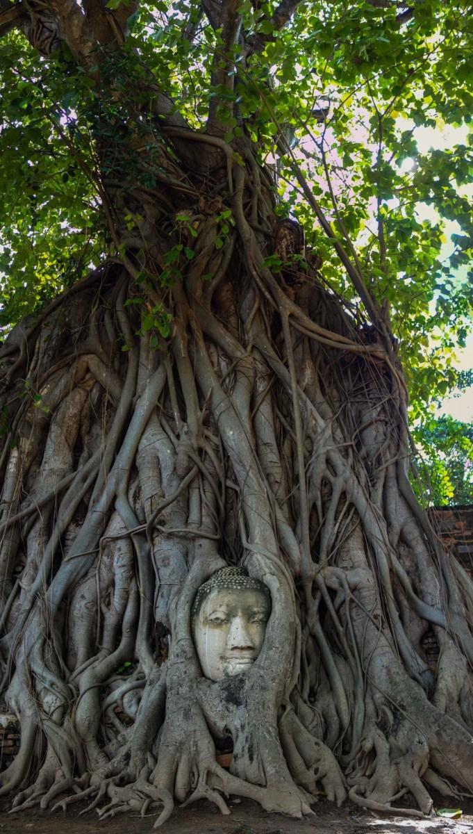 Buddha head in the tree in Ayutthaya