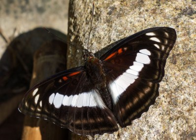 Butterfly resting in the sun