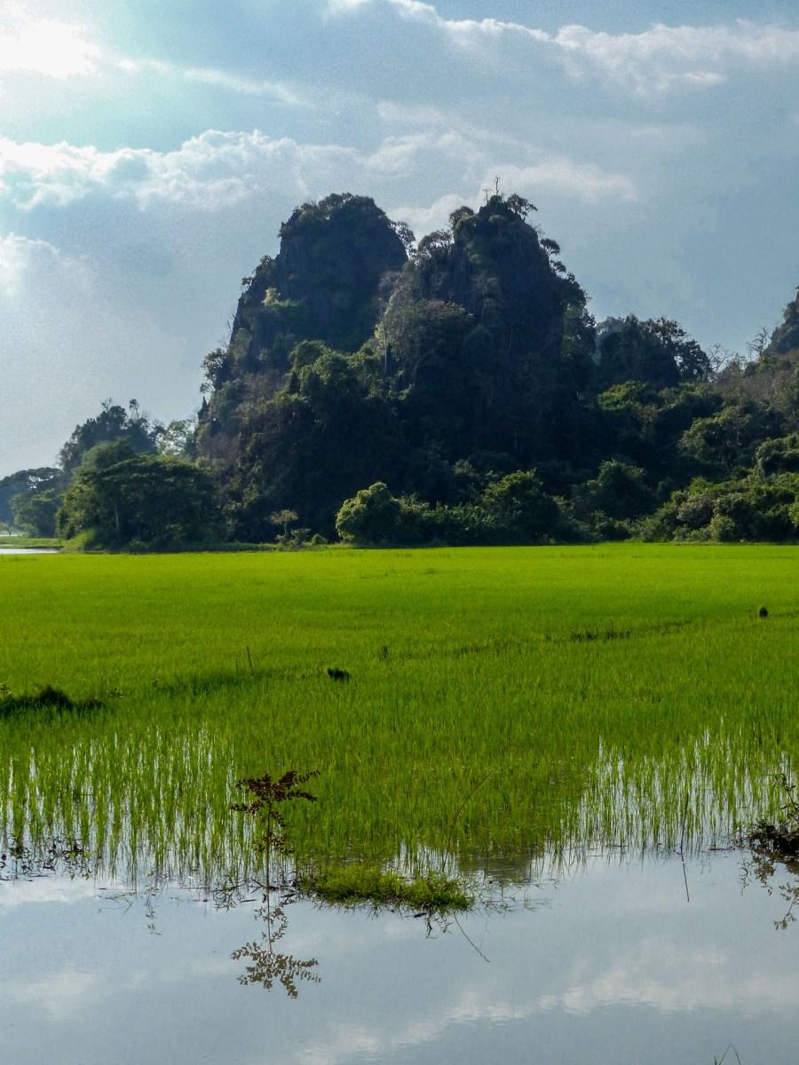 Rice fields close to Saddan Cave