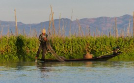 Fisherman infront of floating gardens on Inle Lake