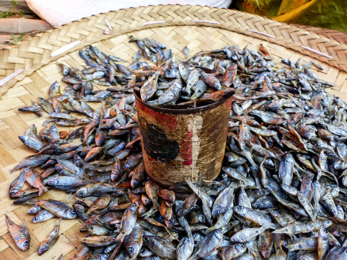 Small fishes on Nanpan market in the south of Inle Lake