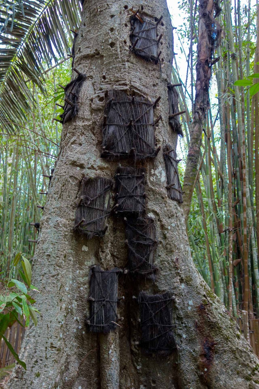 Tana Toraja - baby graves in a tree Christian Jansen & Maria Düerkop