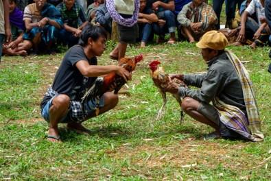 Tana Toraja - making the cocks angry Christian Jansen & Maria Düerkop