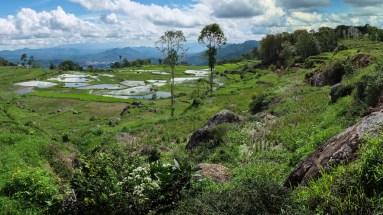Tana Toraja - green landscape panorama Christian Jansen & Maria Düerkop