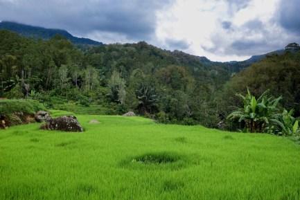 Tana Toraja - green rice paddy Christian Jansen & Maria Düerkop