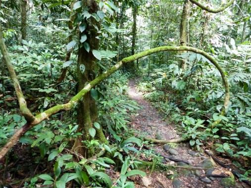 Mulu National Park - loud jungle trek Christian Jansen & Maria Düerkop