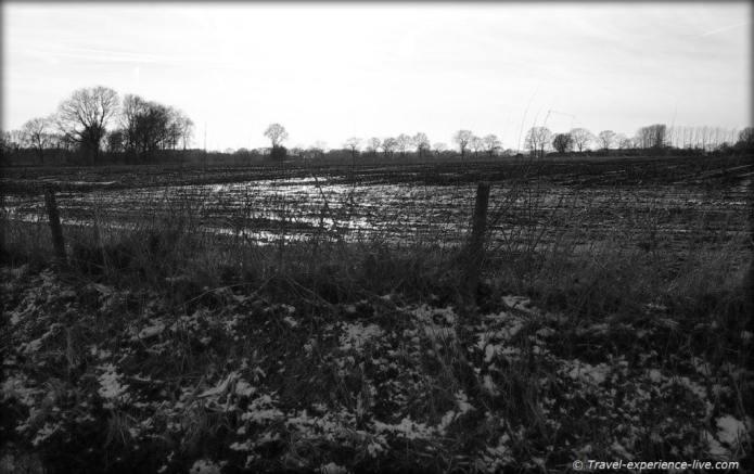 Field in Larum, Geel, Belgium.