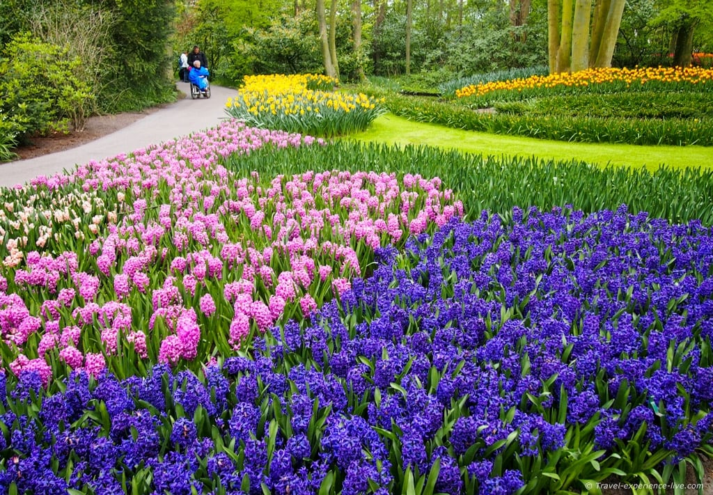 Colorful Keukenhof, the Netherlands.