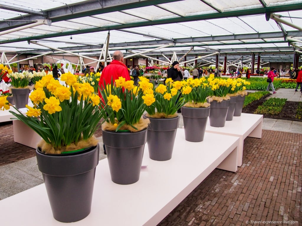 a visit to keukenhof in 40 pictures travel experience live