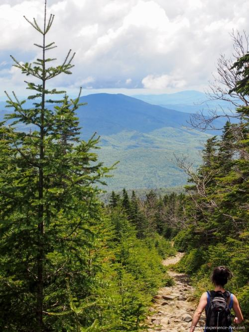 Carriage Road, Mt Moosilauke in the White Mountains.