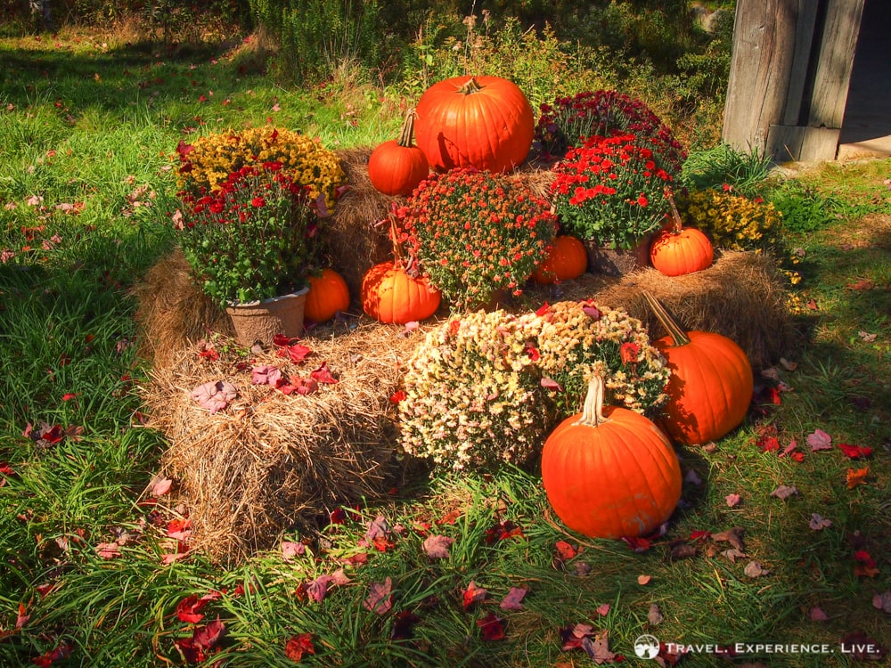 Fall in New England: pumpkins, hay and asters