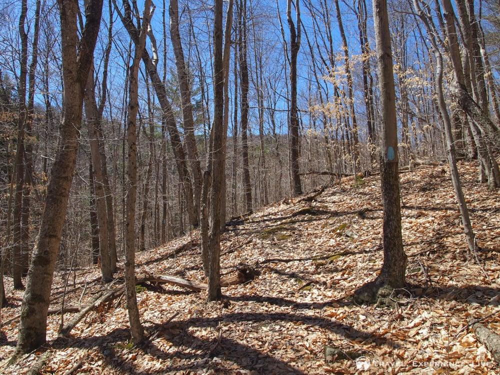 Trees on Bald Top Mountain, Vermont
