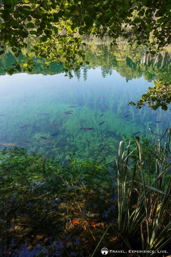 Fish in Plitvice Lakes, Croatia