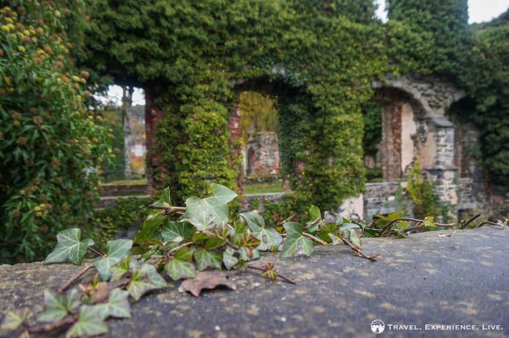 Vines in Villers-la-Ville, Belgium
