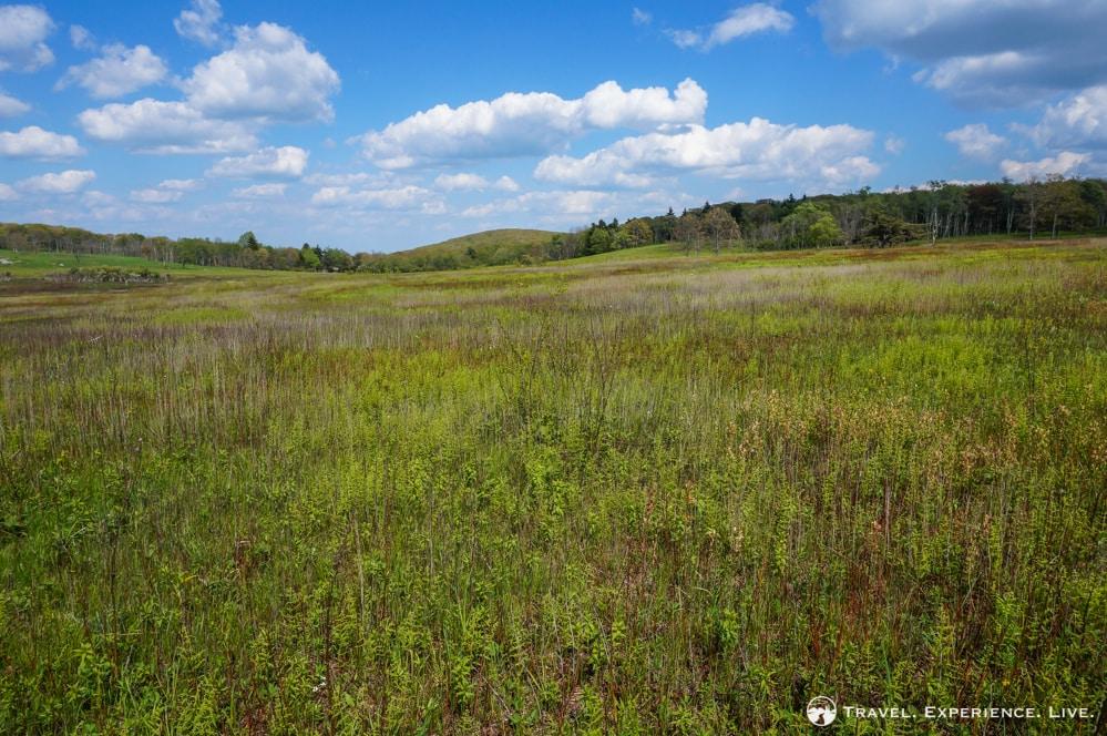 Big Meadows, Shenandoah National Park