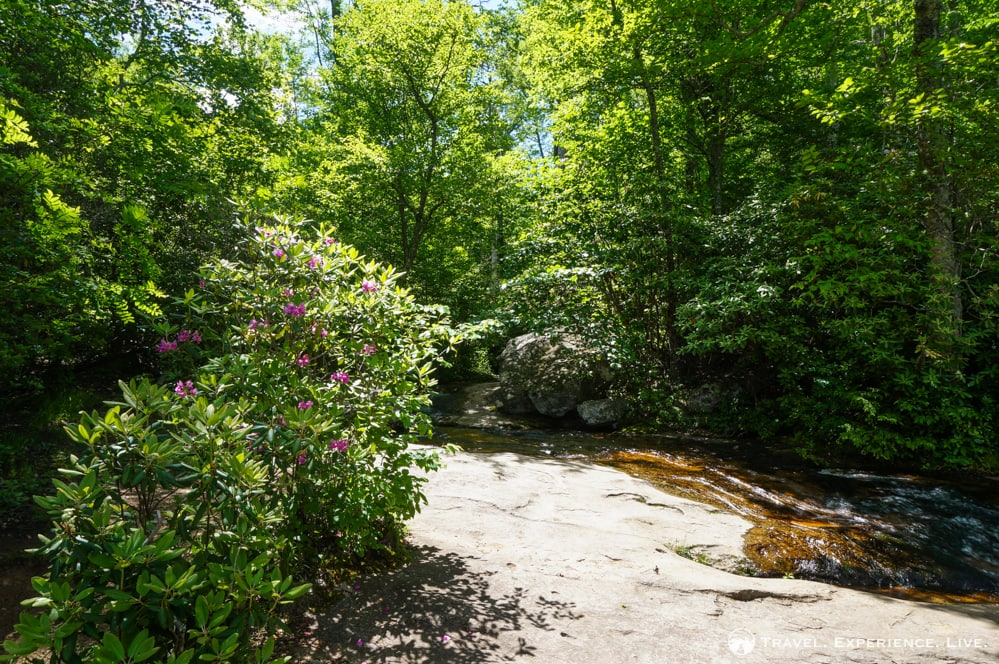 River and Rhododendron