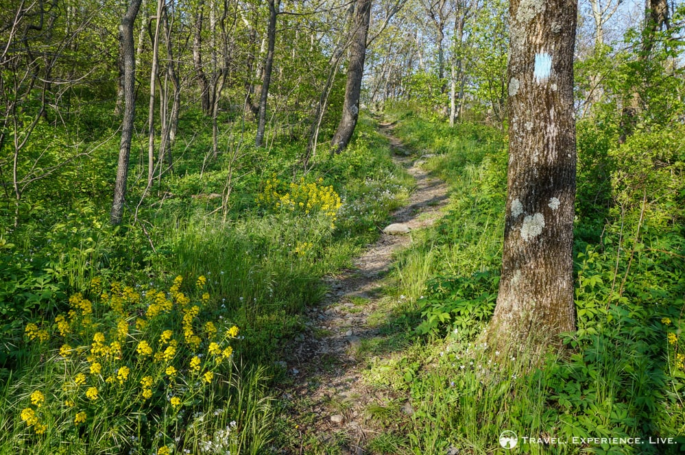 Frazier Discovery Trail, Shenandoah National Park