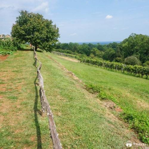 Vineyard at Monticello, Charlottesville
