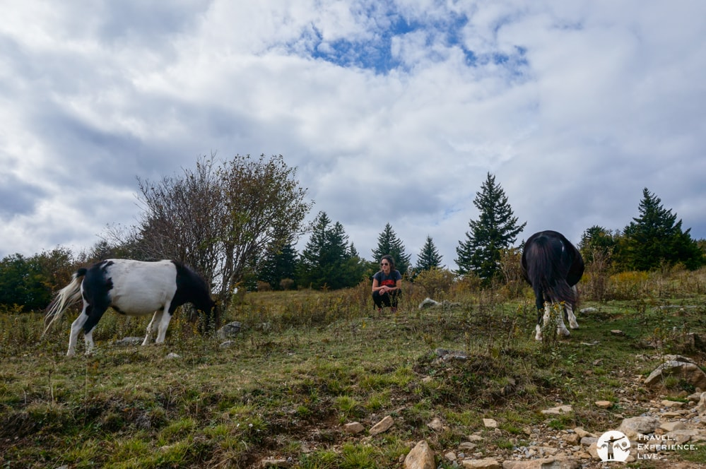 Hanging out with the wild ponies in Grayson Highlands State Park