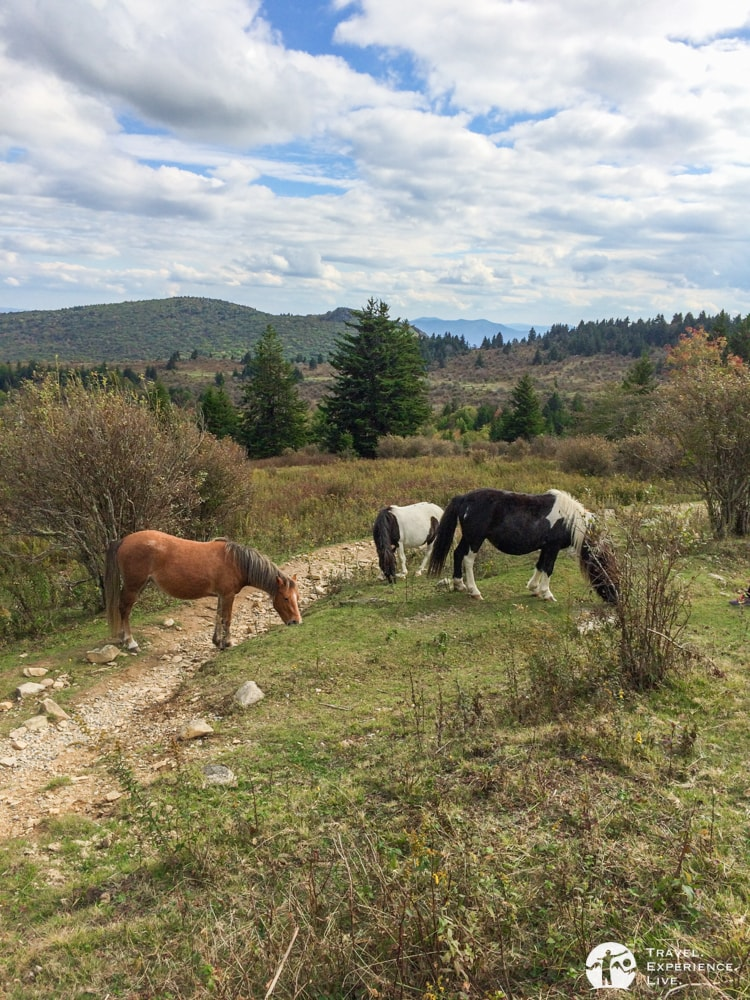 Ponies in Grayson Highlands State Park