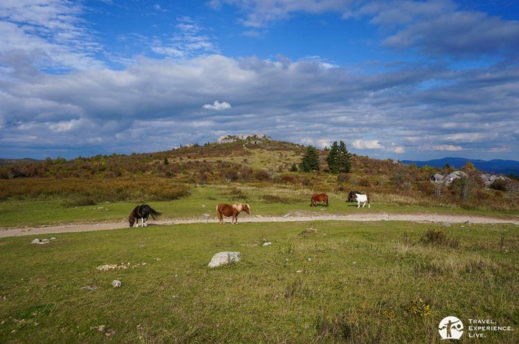 Wild ponies in Grayson Highlands State Park